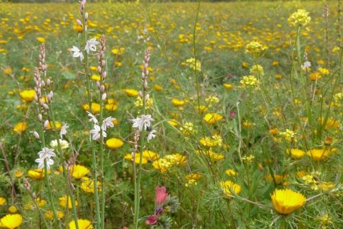 prairie fleurie, Virginie Vermeersch, Racine Nomade